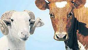 İl Müdürü Şahinbaş: Karaman'ın Kurbanlık Hayvan Sayısı Yeterli Düzeyde