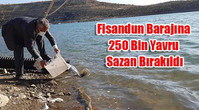 Fisandun Barajına 250 bin yavru sazan bırakıldı