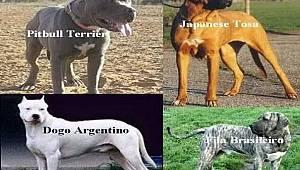 Tehlike Arz Eden Köpek Cinsleri, Ev Hayvanı Kayıt Sistemine Kaydettirilecek