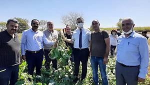 Ereğli Şeker Fabrikası Müdürü Özbay, Karaman'da Pancar Ekili Alanları İnceledi