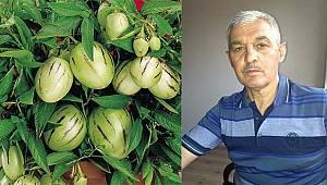 Karamanlı Üretici, Pepino'yu, Avgan'da Yetiştirdi