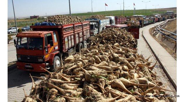 Şekerpancarı Üretimi